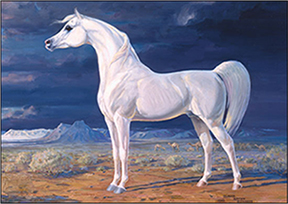 Image result for arabian horse