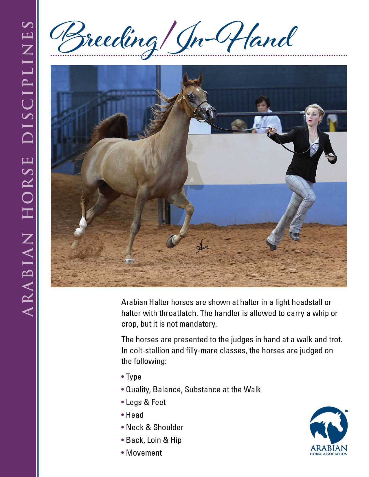 Arabian Horse Disciplines_full page_web_Breeding In Hand